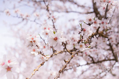 Photograph - Blossoms On A Sunny Day by Ana V Ramirez