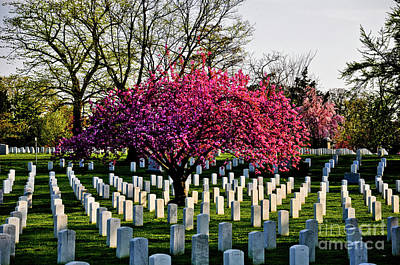 Photograph - Blossoms Over Arlington by Scott Sawyer