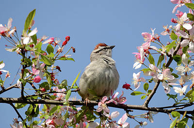 Photograph - Blossoms With Sparrow by Ann Bridges