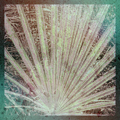Radiate Photograph - Blotch Palm Frond by Marvin Spates