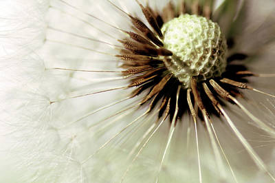 Photograph - Blowball... by Bob Daalder