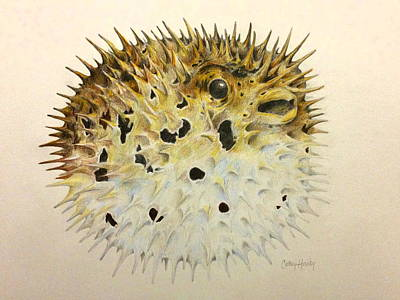 Drawing - Blowfish by Catherine Howley