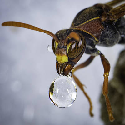 Photograph - Blowing Bubbles by Chris Cousins