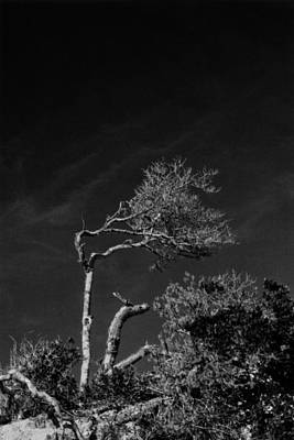 Photograph - Blowing In The Wind by Amarildo Correa