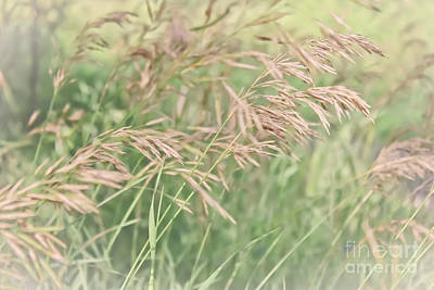 Photograph - Blowing In The Wind by Barbara Dean