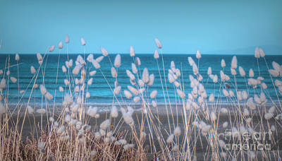Photograph - Blowing In The Wind by Karen Lewis