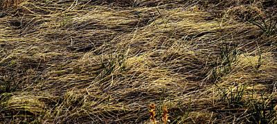 Photograph -  Spring Grass by Nadalyn Larsen