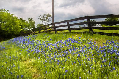 Photograph - Blubonnet Path by David and Carol Kelly