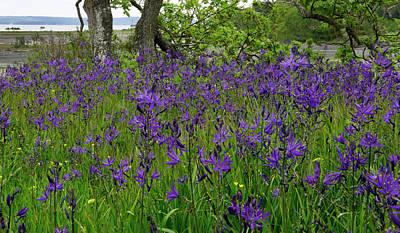 Photograph - Blue Abundance by Inge Riis McDonald