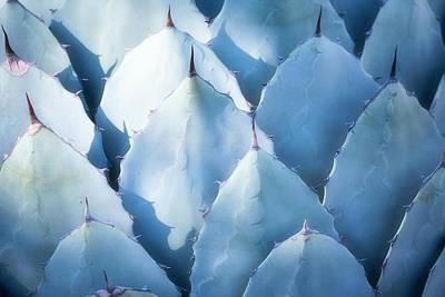 Photograph - Blue Agave Abstract  by Saija Lehtonen