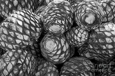 Photograph - Blue Agave Hearts  by John  Mitchell