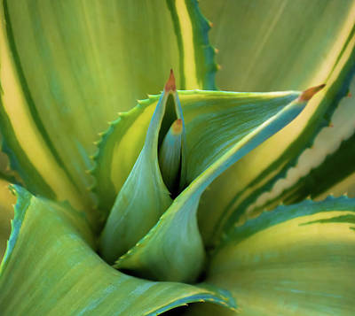 Blue Agave Print by Karen Wiles