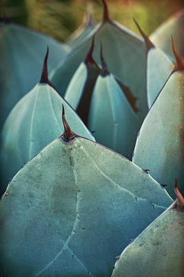 Photograph - Blue Agave  by Saija Lehtonen
