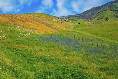 Photograph - Blue And Gold Hills In California by Lynn Bauer