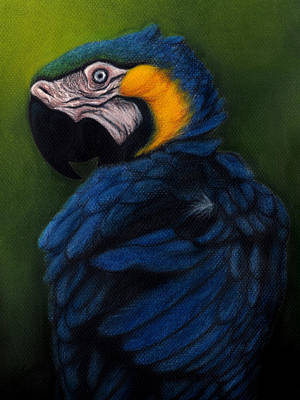 Blue And Gold Macaw Art Print by Enaile D Siffert