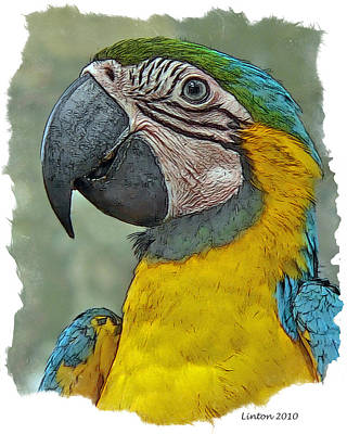 Macaw Digital Art - Blue And Gold Macaw by Larry Linton