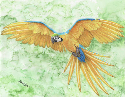 Macaw Mixed Media - Blue-and-gold Macaw by Stephanie Yates