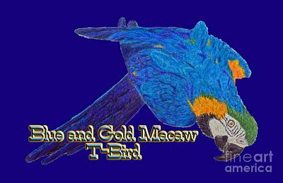 Macaw Drawing - Blue And Gold Macaw by Zazu's House Parrot Sanctuary