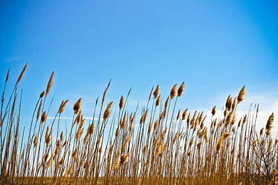 Photograph - Blue And Gold Morning by Colleen Kammerer