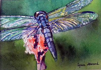 Blue And Green Dragonfly Art Print