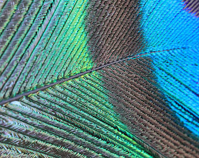 Photograph - Blue And Green Feathers by Angela Murdock