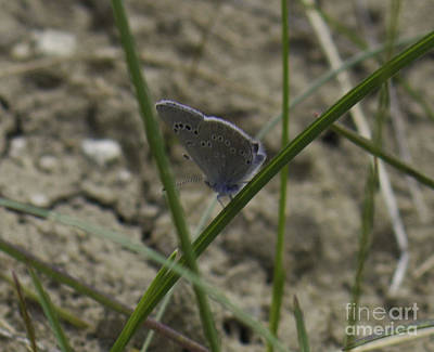 Photograph - Blue And Grey Moth by Donna Munro