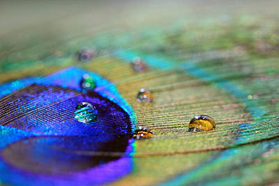 Photograph - Blue And Orange Water Drops by Angela Murdock