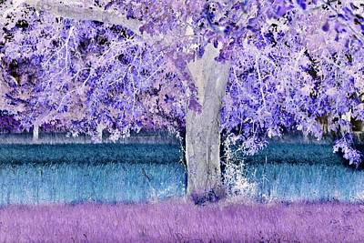Photograph - blue and purple Apple tree by Werner Lehmann
