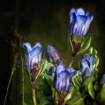 Photograph - Blue And Purple Wildflowers by Belinda Greb