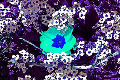 Photograph - Blue And White Spring Flowers by Joseph Coulombe