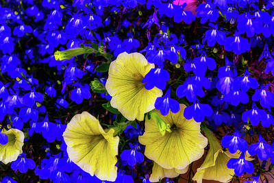 Photograph - Blue And Yellow by Garry Gay