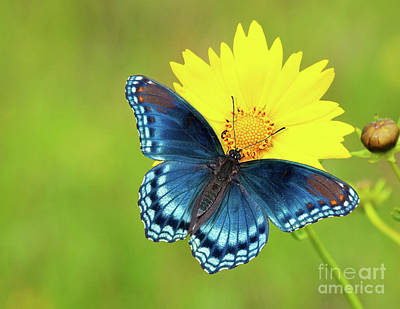 Blue And Yellow On Green Art Print