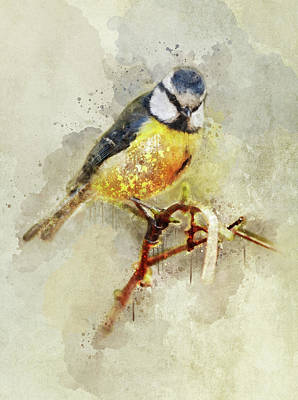 Blue And Yellow Tit On The Branch Art Print