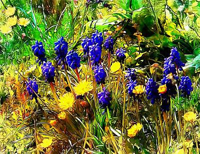 Photograph - Blue And Yellow Wild Flower Medley by Dorothy Berry-Lound