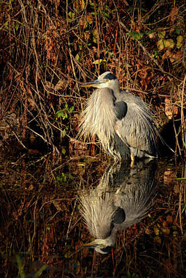 Photograph - Great Blue by Ann Bridges