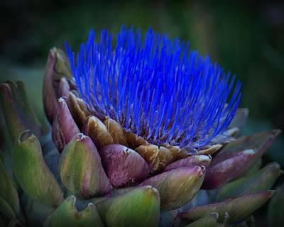 Photograph - Blue Artichoke by Patricia Strand