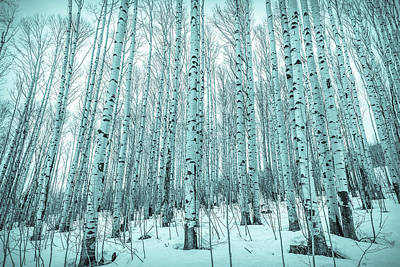 Photograph - Blue Aspens by Eric Glaser