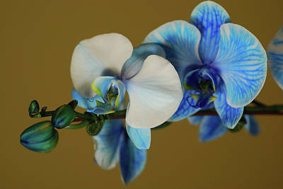 Designers Choice Photograph - Blue Azure II by Don Wright