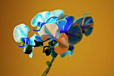 Designers Choice Photograph - Blue Azure IIi by Don Wright