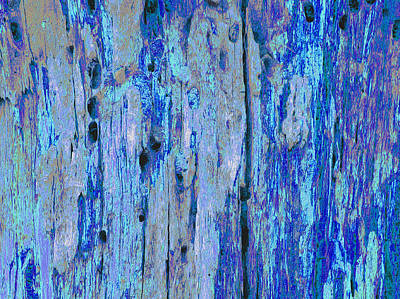 Photograph - Blue Bark Oil by Stephanie Grant