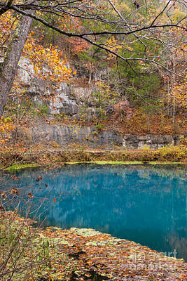 Photograph - Blue Beauty In Autumn by Jennifer White