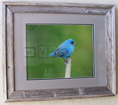Bunting Drawing - Blue Beauty - Indigo Bunting by Michael Kreizel