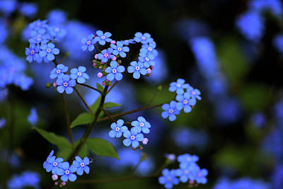 Photograph - Blue Beauty by Rowana Ray