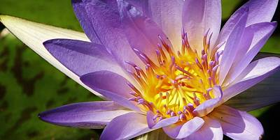 Photograph - Blue Beauty Waterlily by Bruce Bley