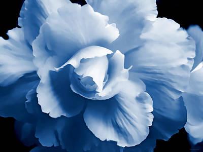 Blue Begonia Floral Art Print