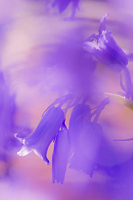 Photograph - Blue Bells by Kelvin Trundle