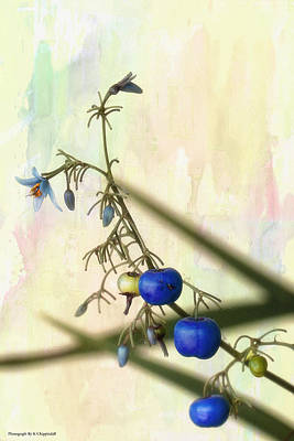 Photograph - Blue Berries 01 by Kevin Chippindall
