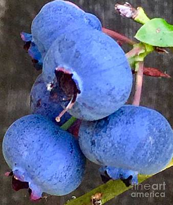 Photograph - Blue Berry Blues by Susan Garren