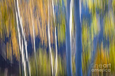 Impressionism Photos - Blue birches on lake shore by Elena Elisseeva