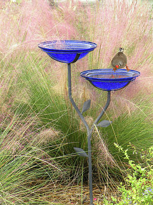 Print featuring the photograph Blue Bird Bath by Rosalie Scanlon